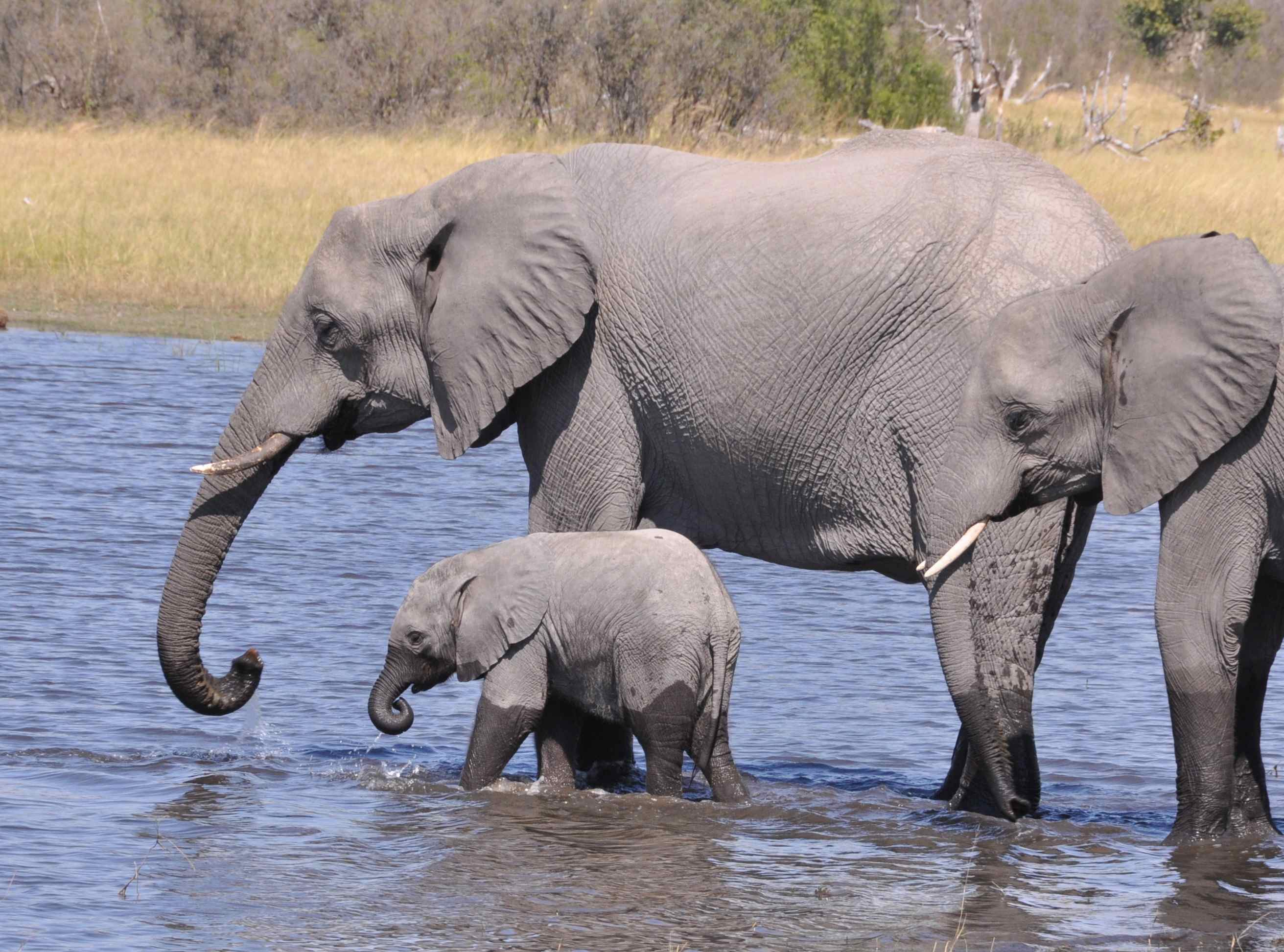 Cute and cuddly baby elephants marion e lane - Cute elephant pictures ...